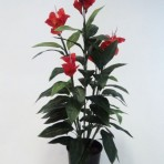 120CM CANNA LILY RED