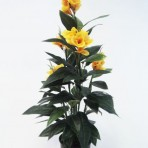 120CM CANNA LILY YELLOW