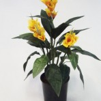 60CM CANNA LILY YELLOW
