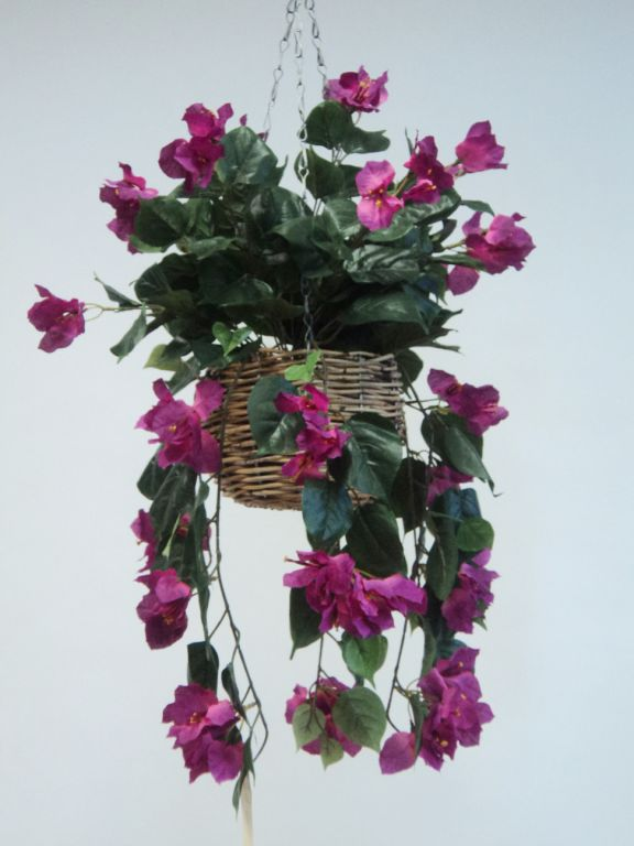 BOUGAINVILLEA BASKET