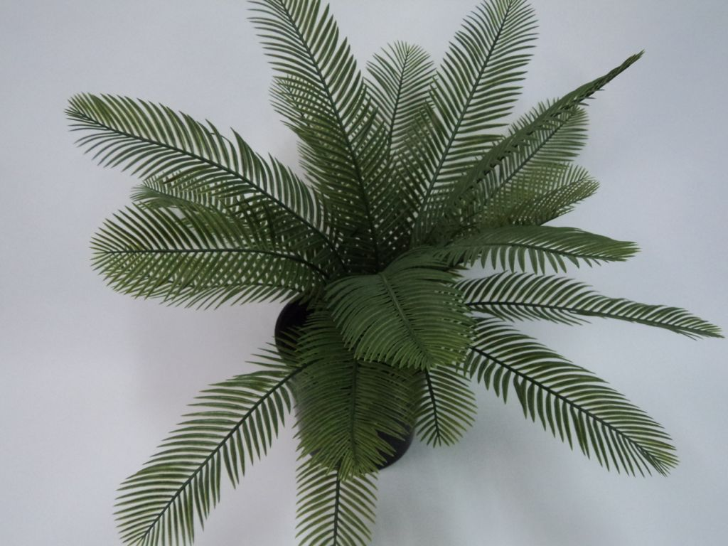 CYCAD X 22 LEAVES