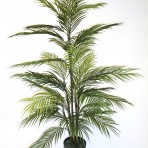 ARECA PALM 120CM HIGH