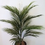 ARECA PALM 90CM HIGH