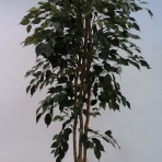 180CM FICUS TREE