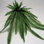 BOSTON FERN X 42 LEAVES