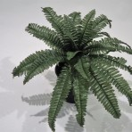 BOSTON FERN DARK GREEN