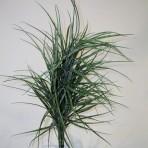 GRASS BUSH 70CM