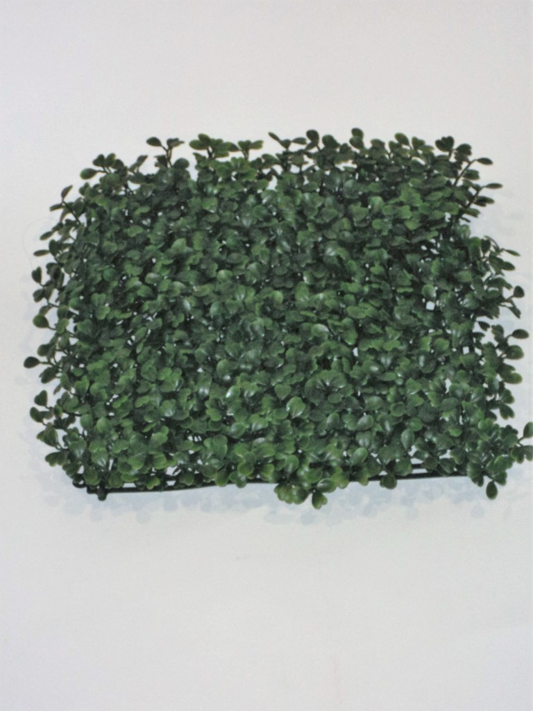 BOXWOOD SQUARE