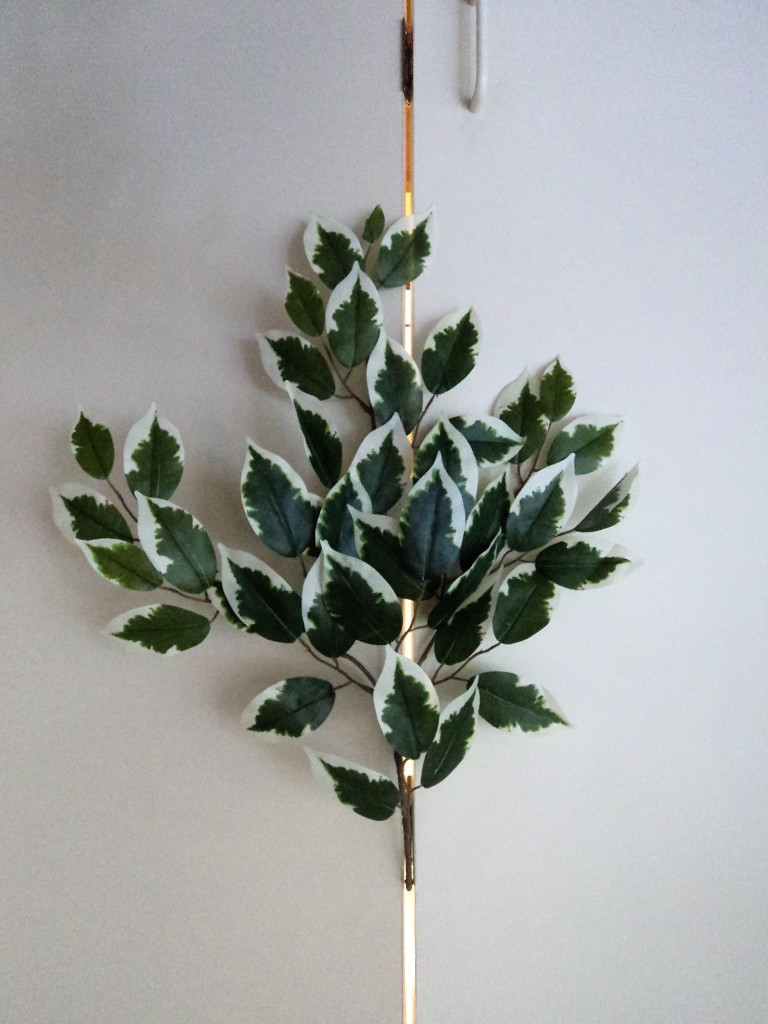 FICUS SPRAY WITH 42 LEAVES