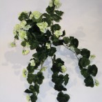 GERANIUM HANGING BUSH CREAM/GREEN