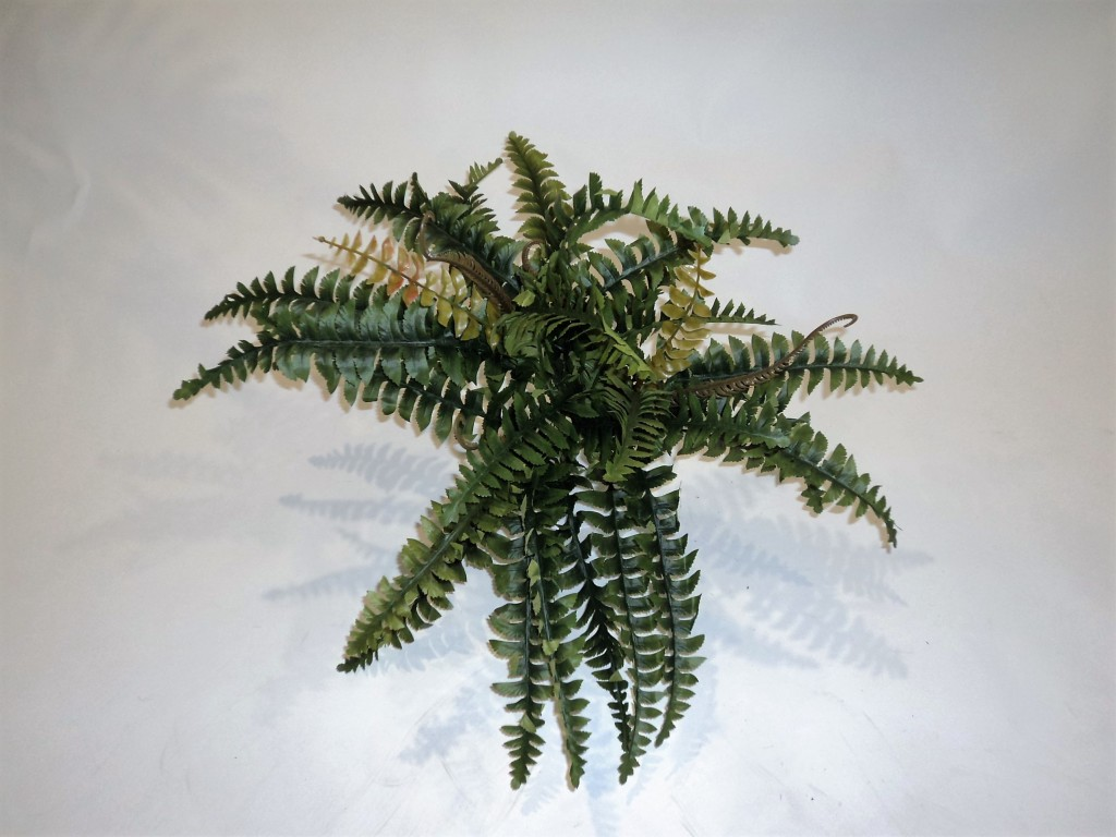 SWORD FERN MEDIUM