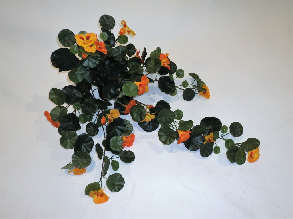 NASTURTIUM BUSH ORANGE