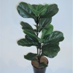 FIDDLE LEAF FICUS TREE