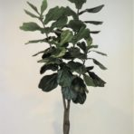 FIDDLE LEAF TREE 180CM