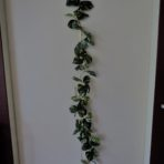 POTHOS GARLAND 180CM LONG X 76 LEAVES
